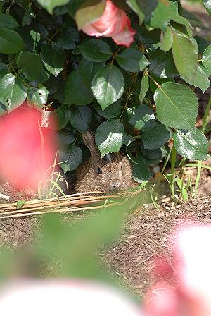 ウサギ72