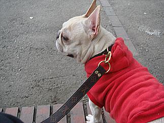 Stroll of dog08051901
