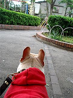 Stroll of dog08051902