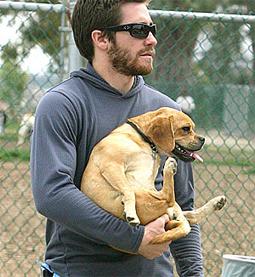 celebritydog080728012.jpg