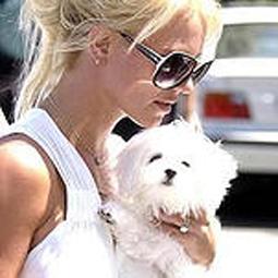 celebritydog080728013.jpg