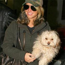 celebritydog080728016.jpg