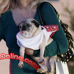 celebritydog080728017.jpg