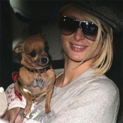 celebritydog080728018.jpg