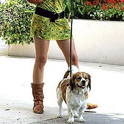 celebritydog080728019.jpg
