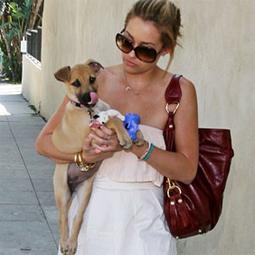 celebritydog08072802.jpg