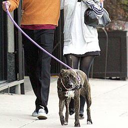 celebritydog080728020.jpg