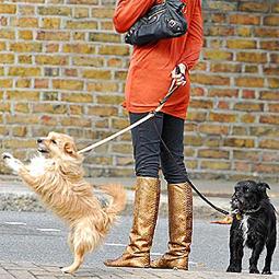 celebritydog080728021.jpg
