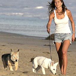 celebritydog080728024.jpg