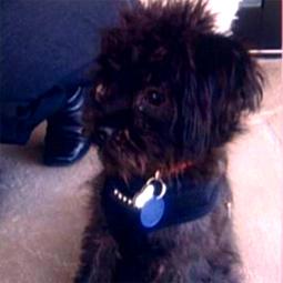 celebritydog08072805.jpg