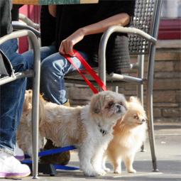 celebritydog08072806.jpg