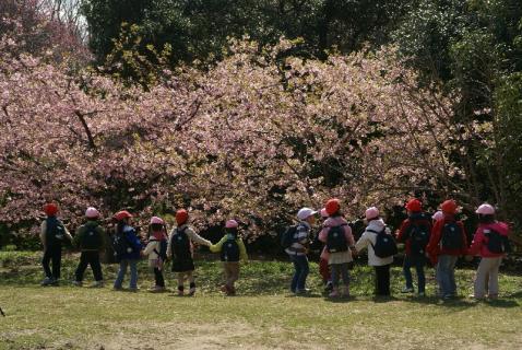 DSC06421桜1