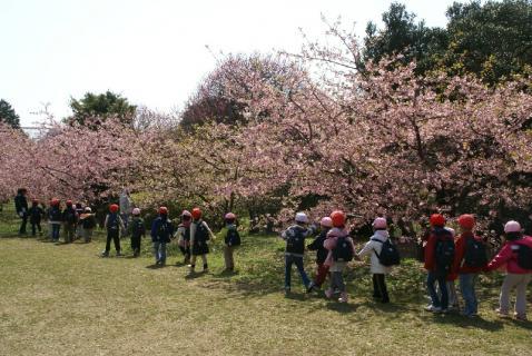 DSC06422桜2