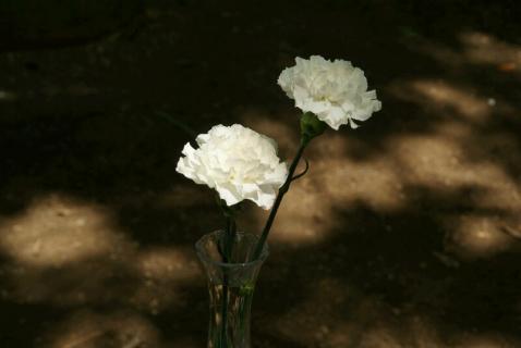 DSC07293花