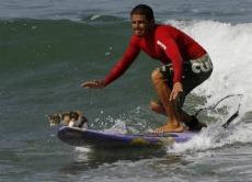 サーフィンするネコ
