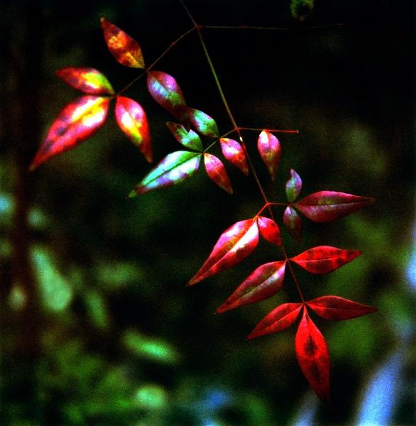 小さい秋の始まり
