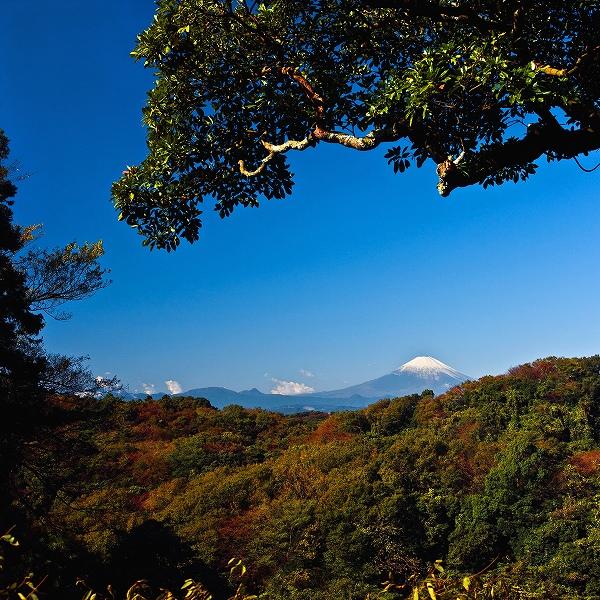澄み渡る空に凛と佇む富士山