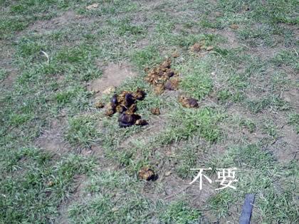 ニーハオ北京 馬2