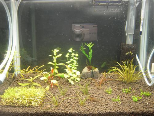 実験用水槽