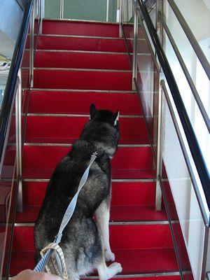 階段を上がる北斗