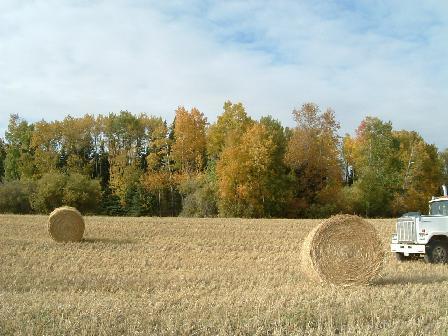 麦わら090920081