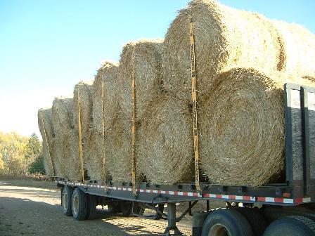 麦わら092920082