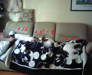 0416a_2007.jpg
