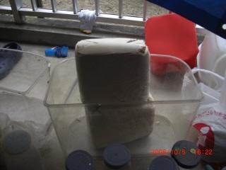 菌糸ビン作成2-1
