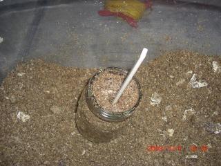 菌糸ビン作成2-4