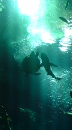 サメとカメ