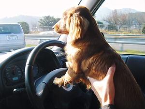 運転楽しい?