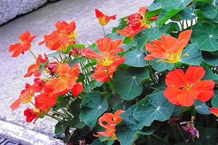 入口のオレンジの花