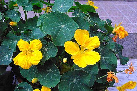 入口に黄色の花
