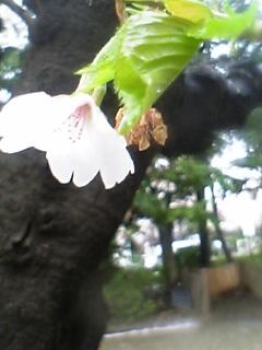 06-04-05_10-20.jpg