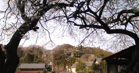 鎌倉8Image
