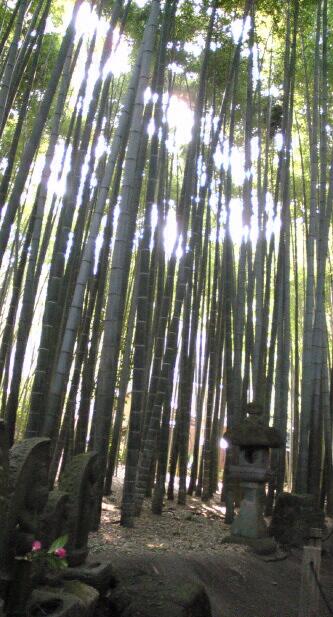 鎌倉9Image
