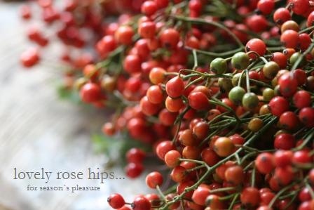 Rosehips2.jpg