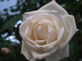 s_022_20080521225625.jpg