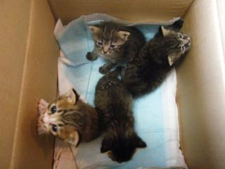 子猫 4匹 090531 2