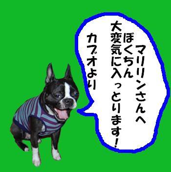 akabu-1.jpg