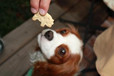 動物クッキー♪