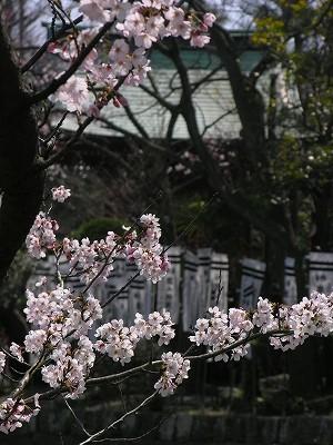 旗上弁天と桜20090404.jpg