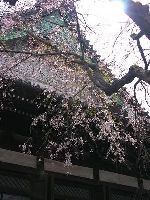 本覚寺本堂20090404