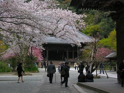 妙本寺境内20090404