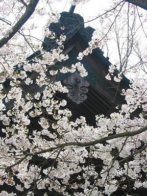 妙本寺二天門と桜2-20090404