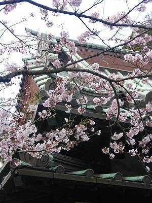 安養院の桜20090404