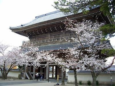 光明寺山門と桜20090404