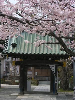 妙隆寺山門と桜20090404