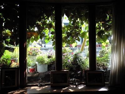 窓越20090606