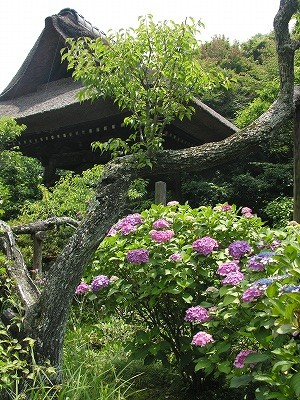 東慶寺2-20090619